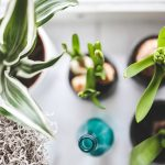 Which Compost is Best for Indoor Plants?
