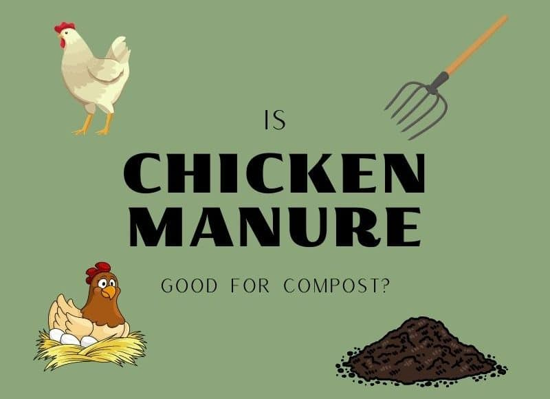 is chicken manure good for compost?