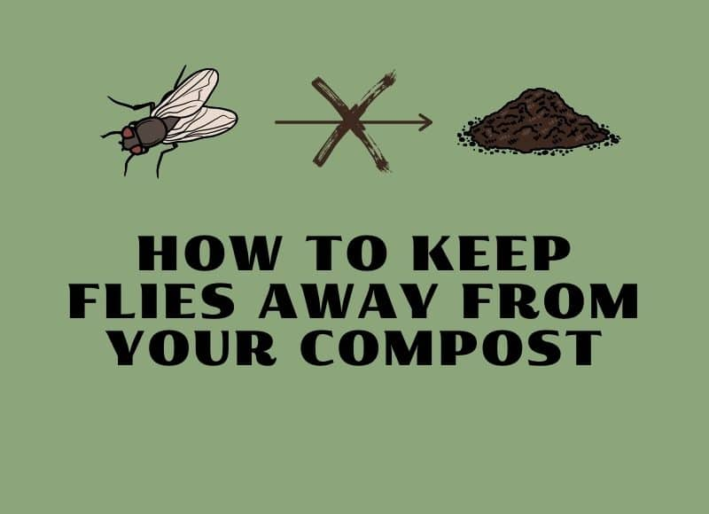 how to keep flies away from your compost