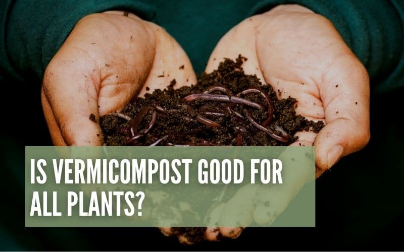 is vermicompost good for all plants