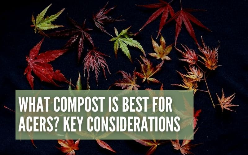 what compost is best for acers