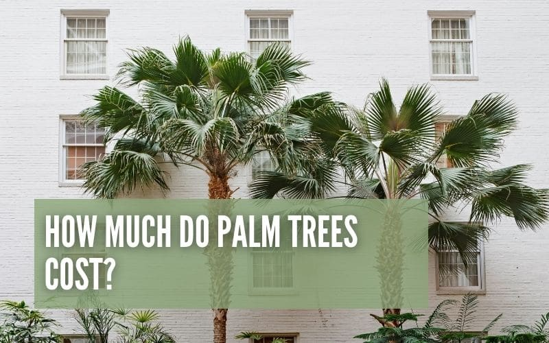 How Much do Palm Trees Cost?