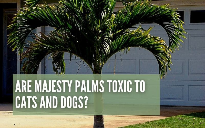 are majesty palms toxic to cats and dogs