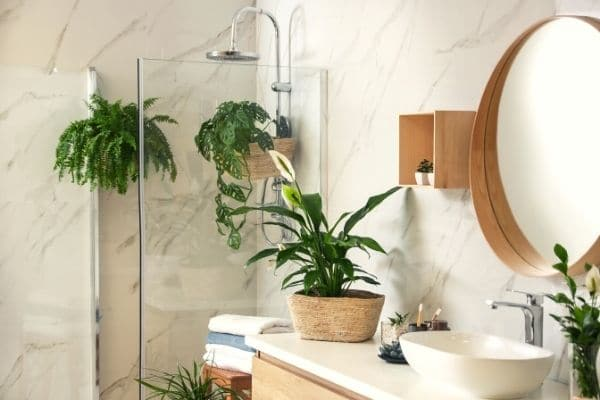 Monstera Plant in the Bathroom